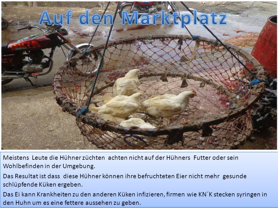 Auf den Marktplatz Meistens Leute die Hühner züchten achten nicht auf der Hühners Futter oder sein Wohlbefinden in der Umgebung.