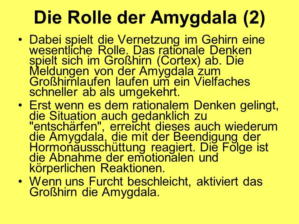 Die Rolle der Amygdala (2)