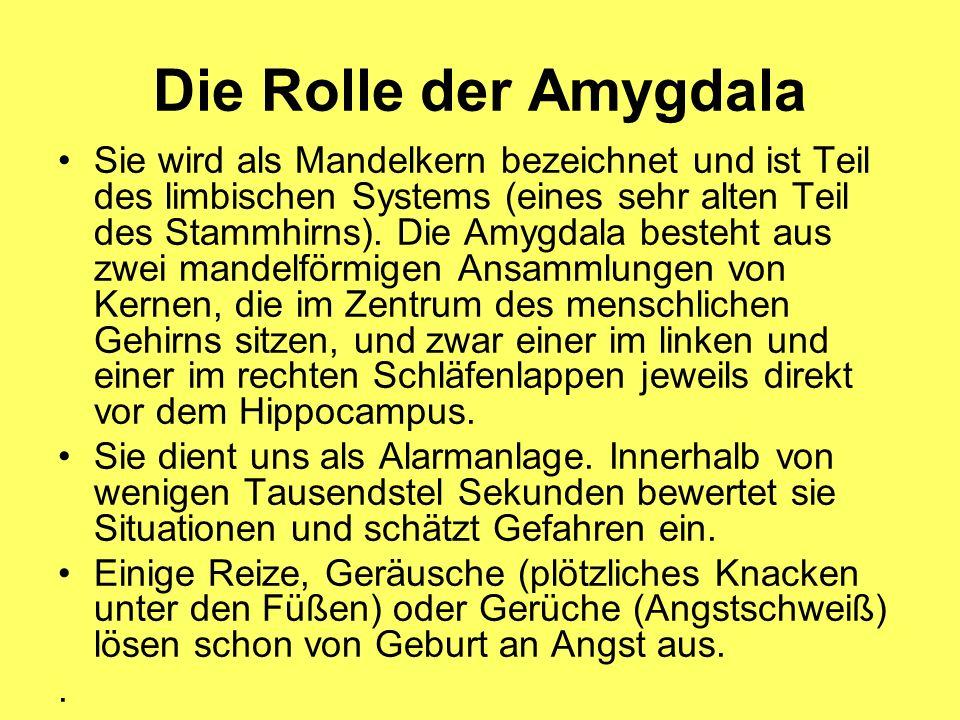Die Rolle der Amygdala