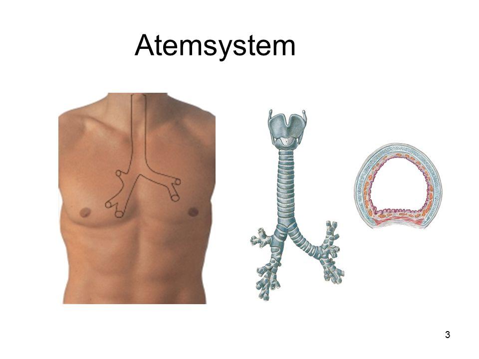 Atemsystem