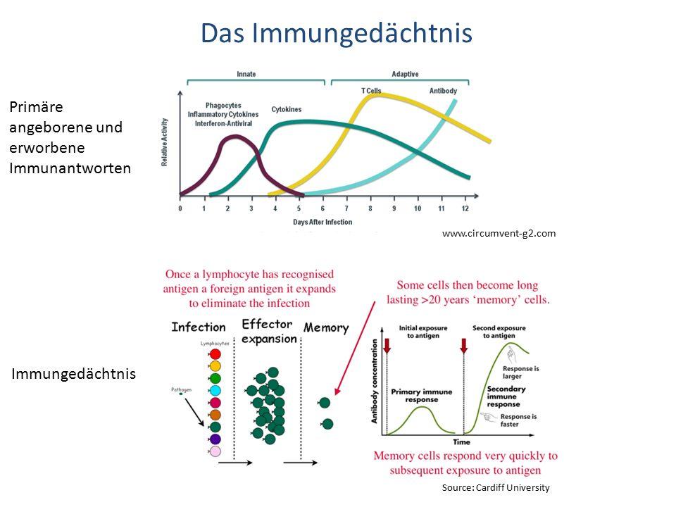 Das Immungedächtnis Primäre angeborene und erworbene Immunantworten