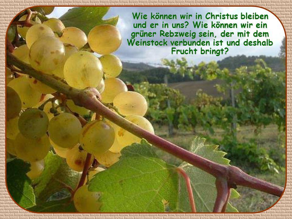Wie können wir in Christus bleiben und er in uns