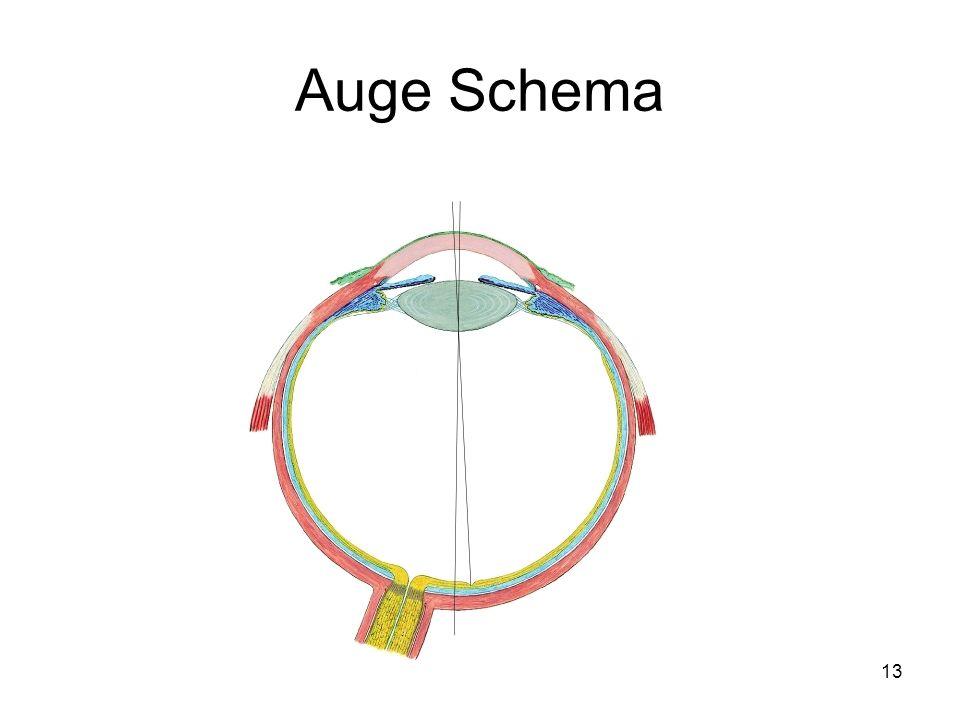 Auge Schema
