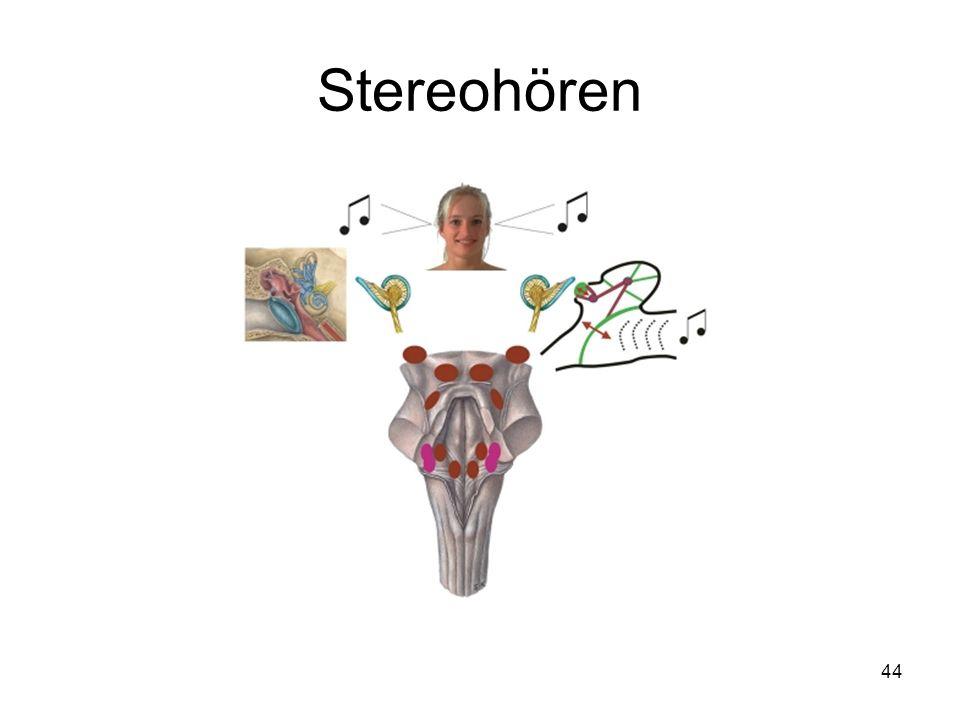 Stereohören