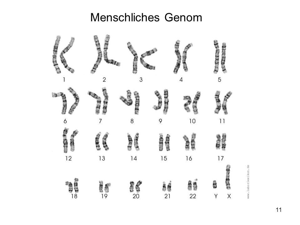 Menschliches Genom