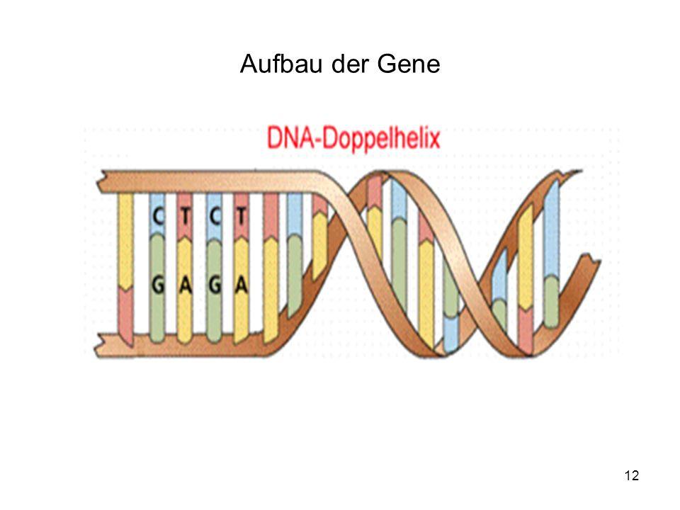 Aufbau der Gene