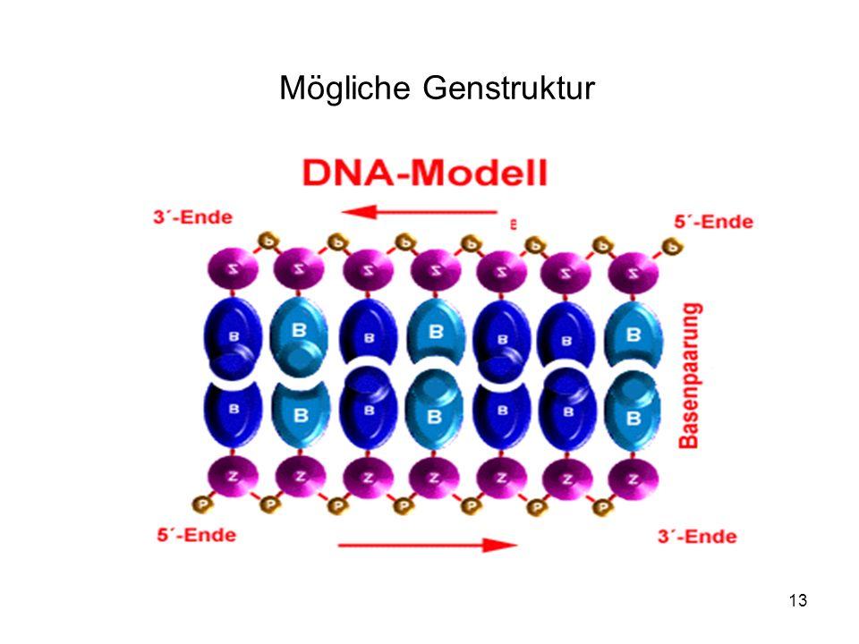 Mögliche Genstruktur
