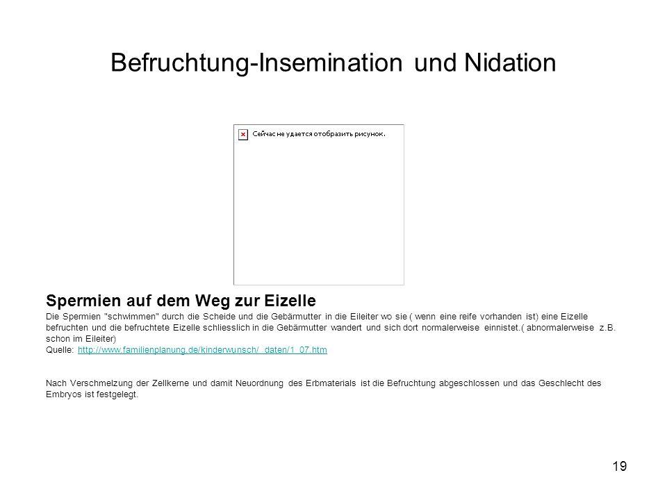 Befruchtung-Insemination und Nidation