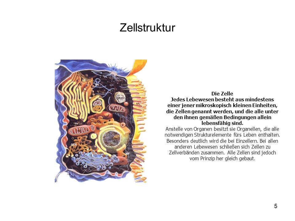 Zellstruktur Die Zelle