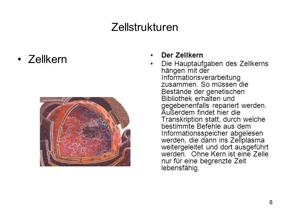 Zellstrukturen Zellkern Der Zellkern