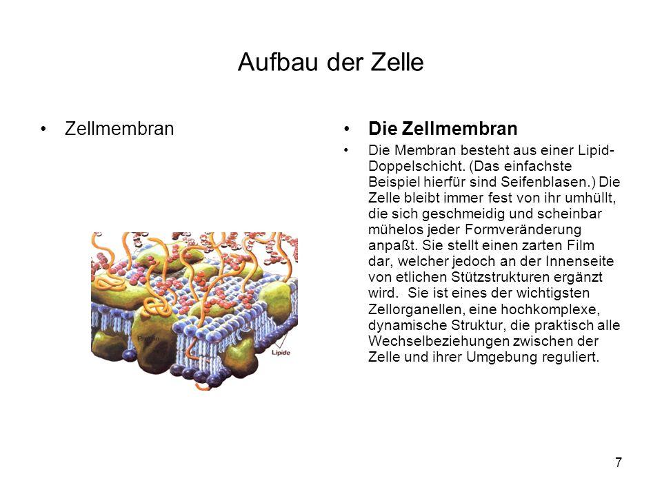 Aufbau der Zelle Zellmembran Die Zellmembran