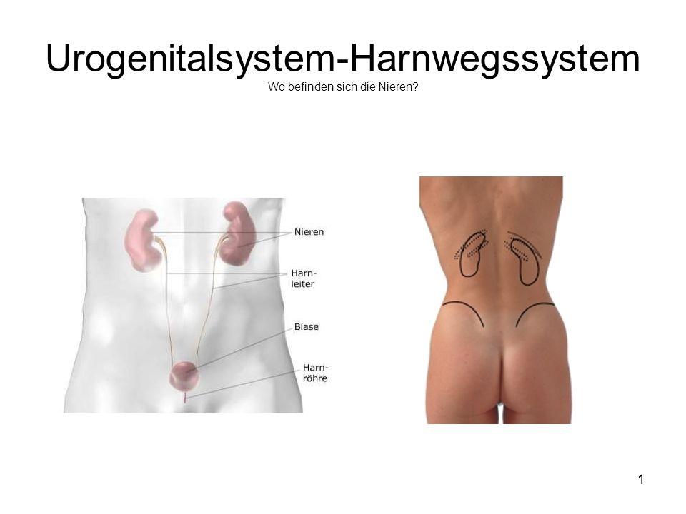 Urogenitalsystem-Harnwegssystem Wo befinden sich die Nieren