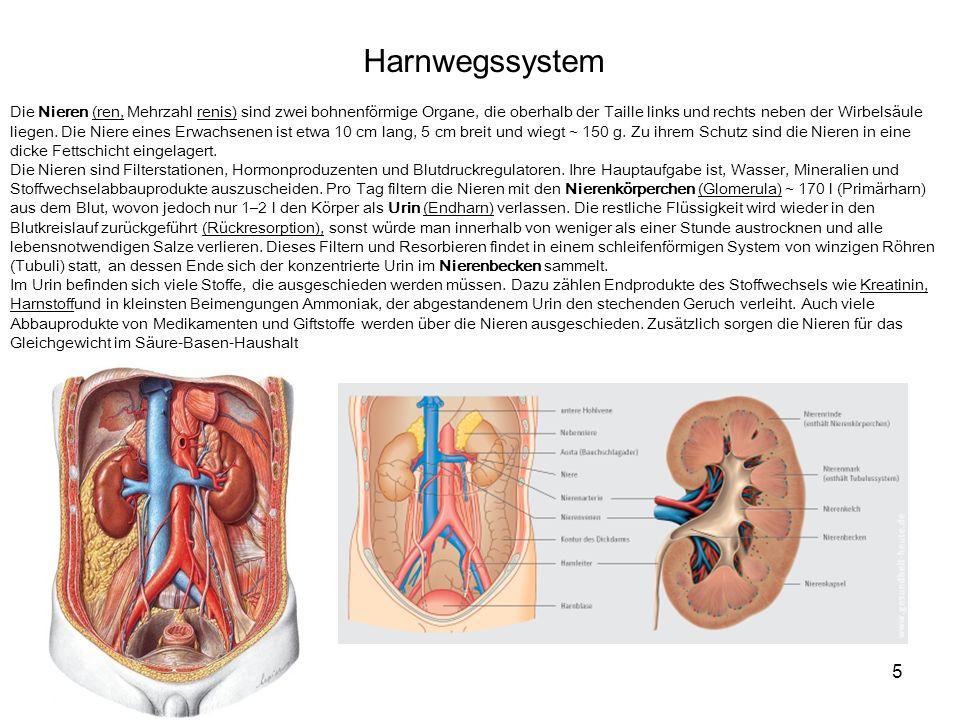 Harnwegssystem