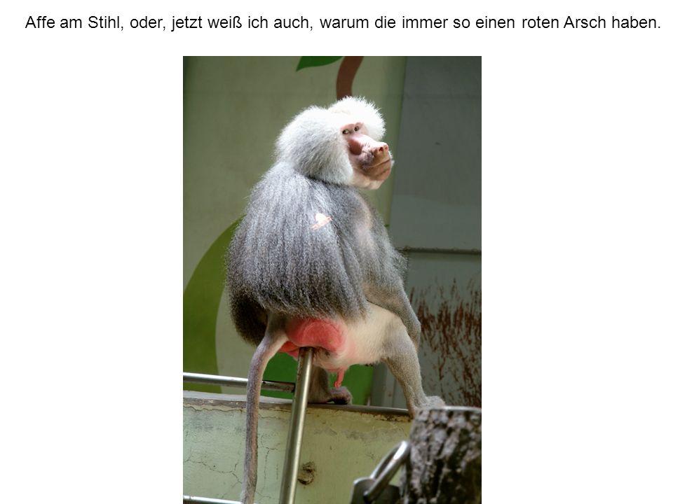 Affe am Stihl, oder, jetzt weiß ich auch, warum die immer so einen roten Arsch haben.