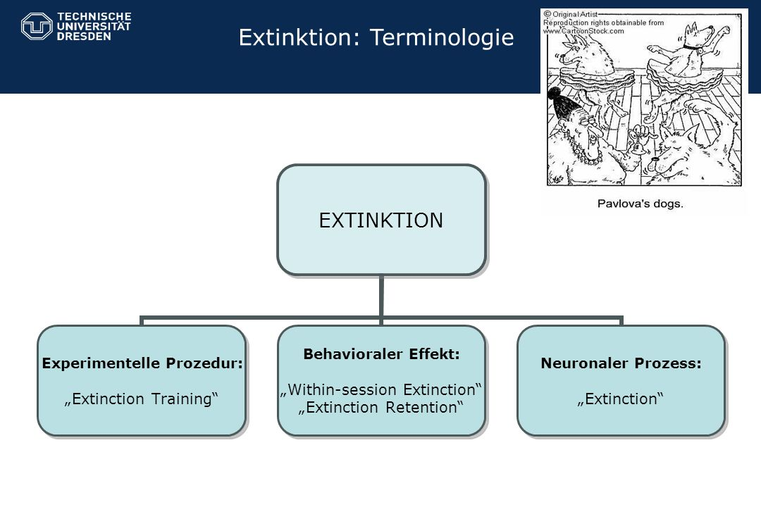 Extinktion: Terminologie