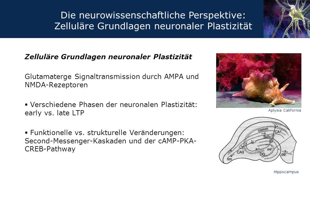 Die neurowissenschaftliche Perspektive: Zelluläre Grundlagen neuronaler Plastizität