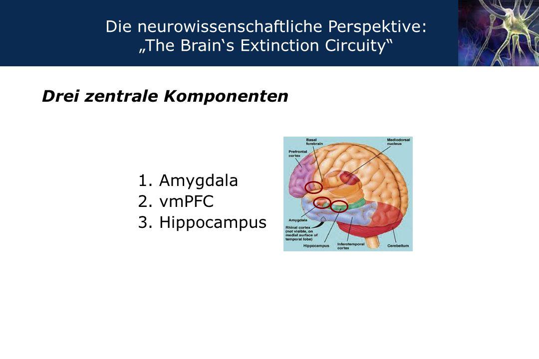 Drei zentrale Komponenten 1. Amygdala 2. vmPFC 3. Hippocampus