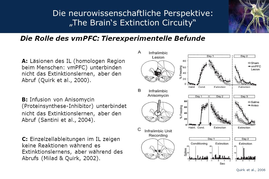 Die Rolle des vmPFC: Tierexperimentelle Befunde