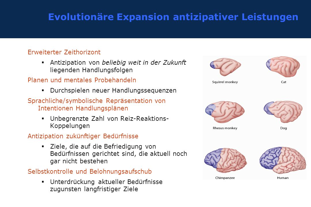 Evolutionäre Expansion antizipativer Leistungen