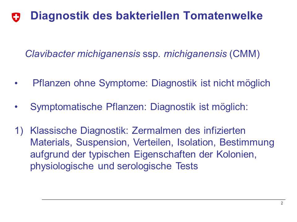 Diagnostik des bakteriellen Tomatenwelke
