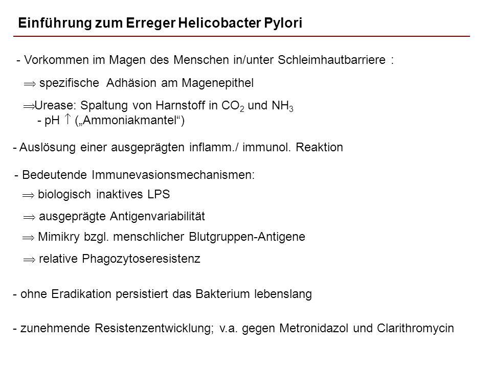 Einführung zum Erreger Helicobacter Pylori