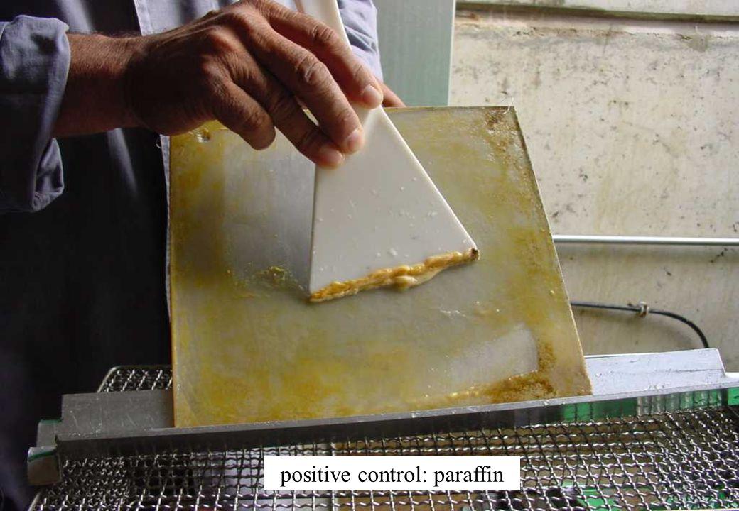 positive control: paraffin