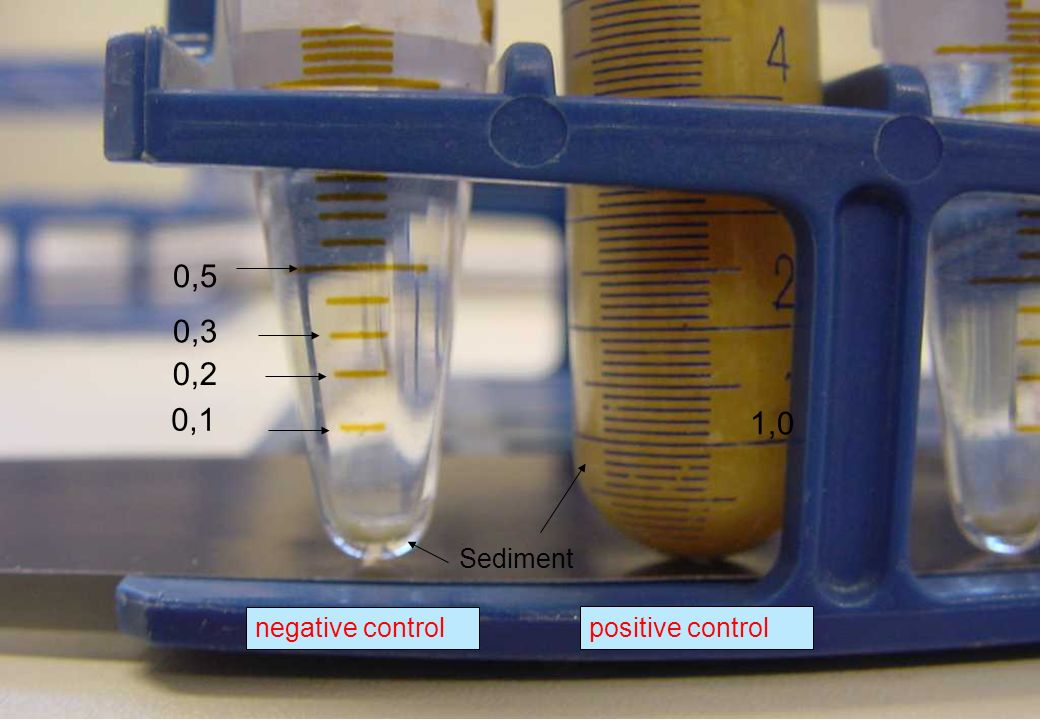 0,5 0,3 0,2 0,1 1,0 Sediment negative control positive control