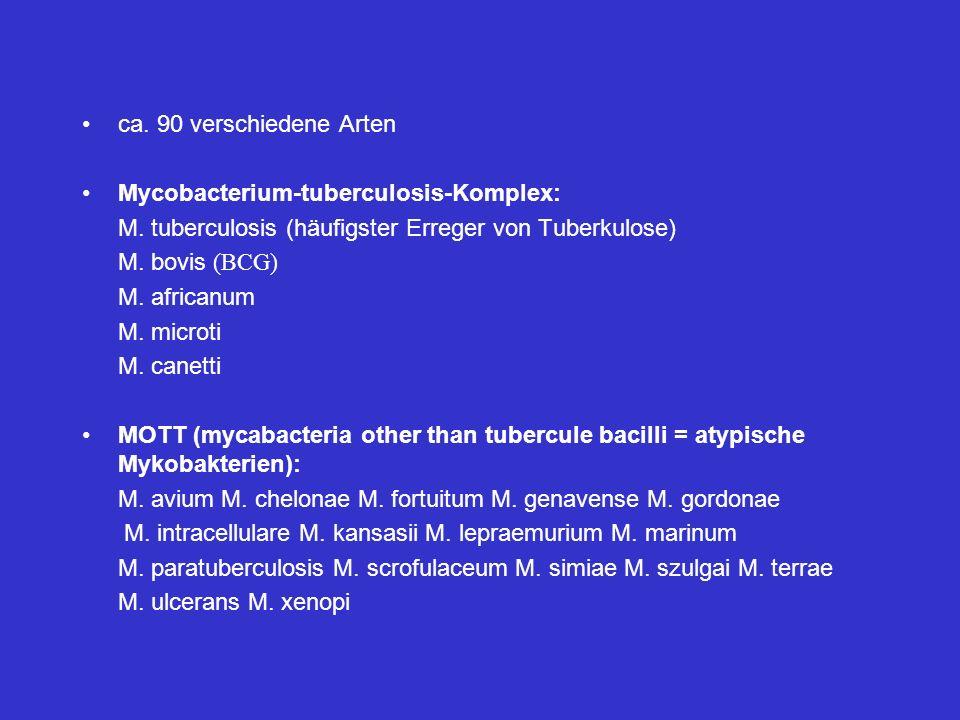 ca. 90 verschiedene Arten Mycobacterium-tuberculosis-Komplex: M. tuberculosis (häufigster Erreger von Tuberkulose)