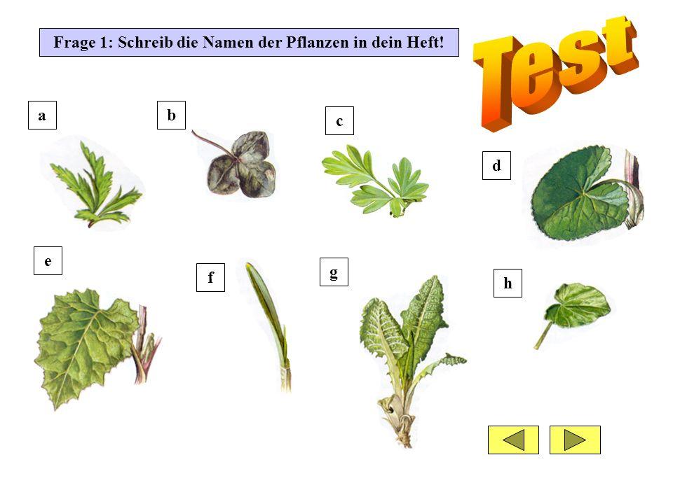 Frage 1: Schreib die Namen der Pflanzen in dein Heft!