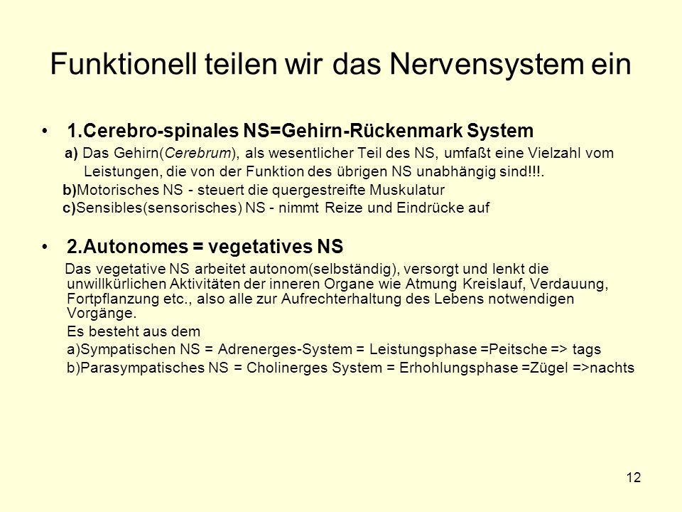 Funktionell teilen wir das Nervensystem ein