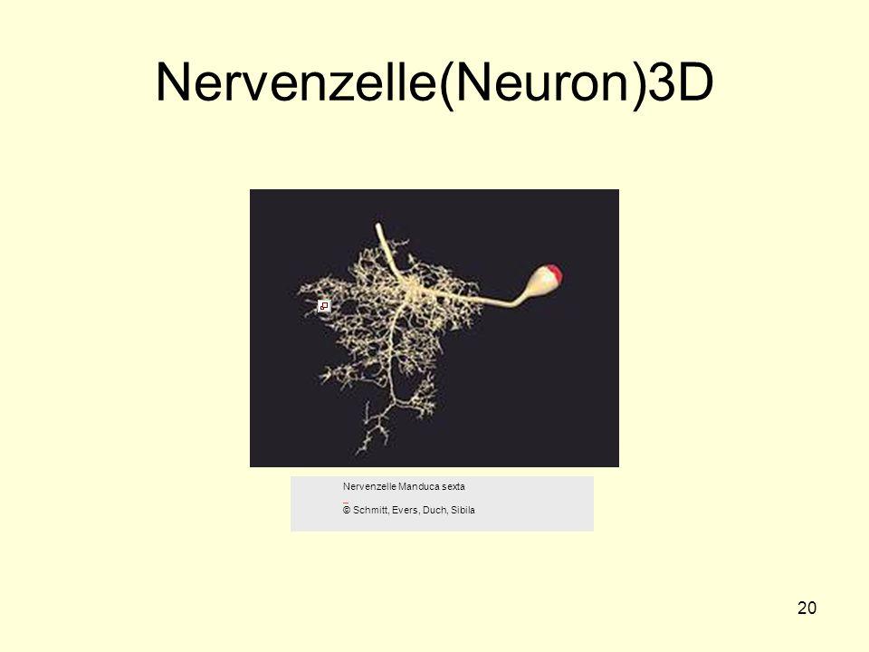 Nervenzelle(Neuron)3D