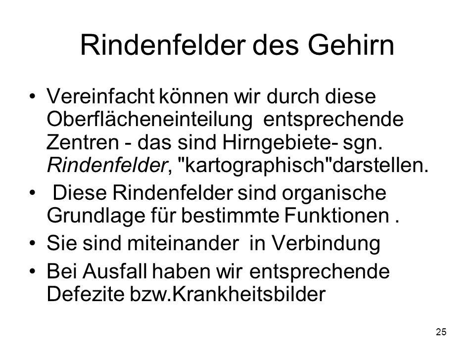 Fein Anatomie Und Funktionen Des Gehirns Fotos - Anatomie Ideen ...
