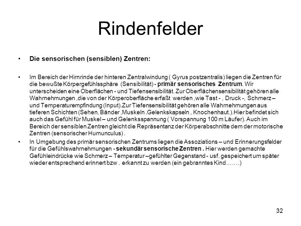 Rindenfelder Die sensorischen (sensiblen) Zentren: