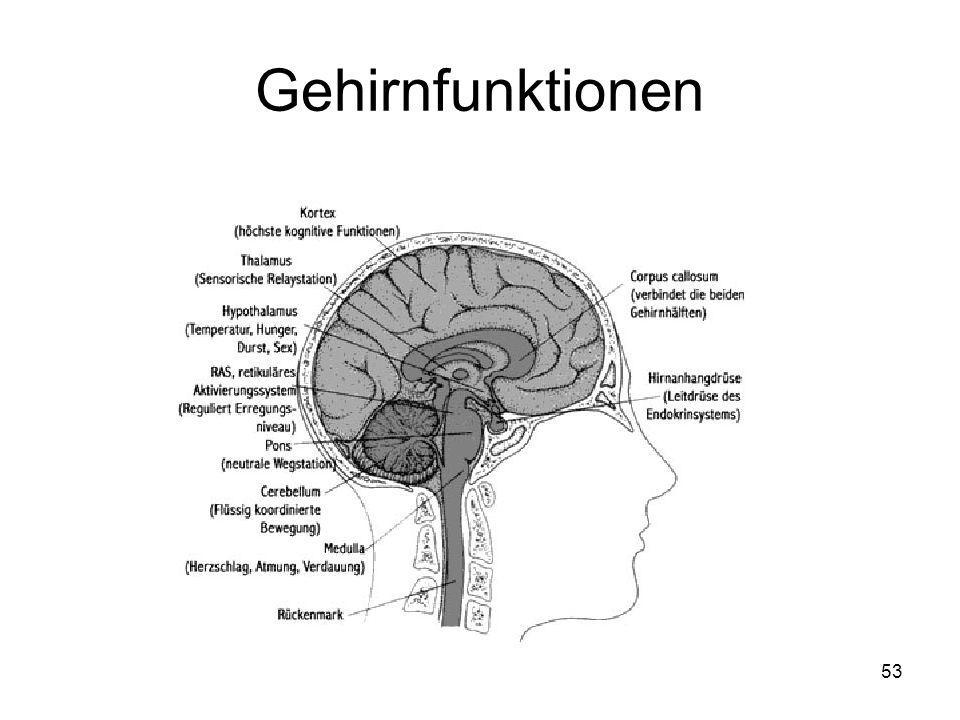 Gemütlich Gehirn Anatomie Und Funktion Interaktiv Bilder - Anatomie ...