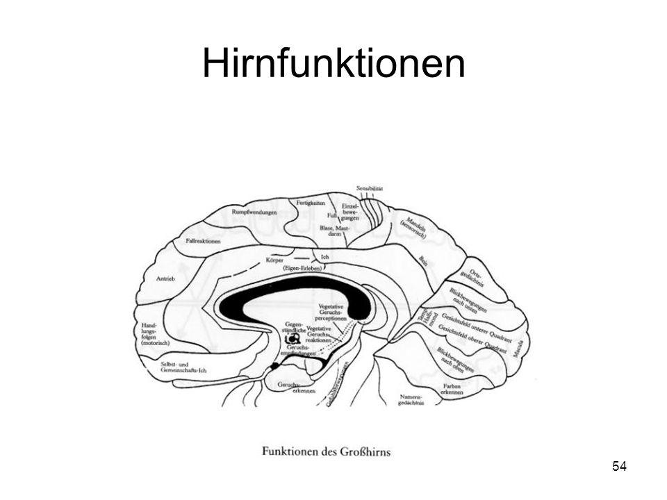 Hirnfunktionen