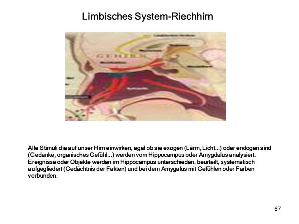 Limbisches System-Riechhirn