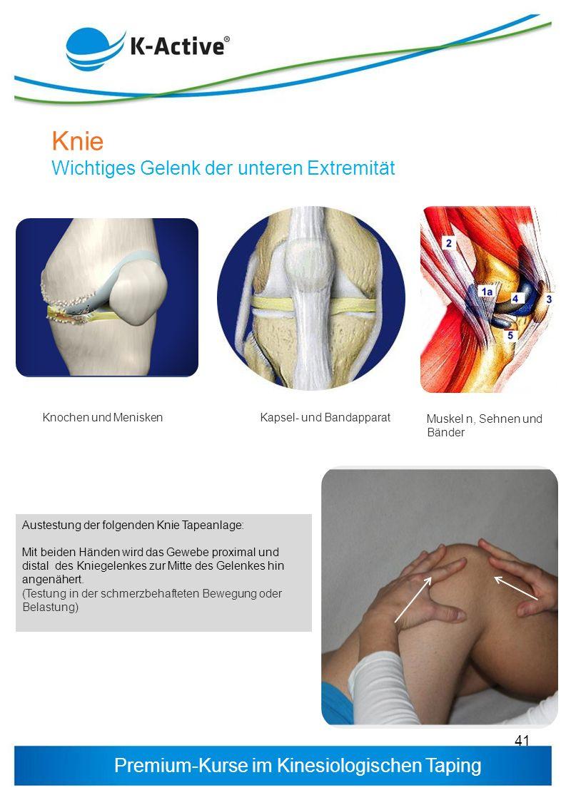 Knie Wichtiges Gelenk der unteren Extremität Knochen und Menisken