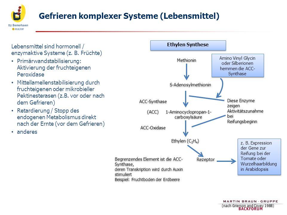Gefrieren komplexer Systeme (Lebensmittel)