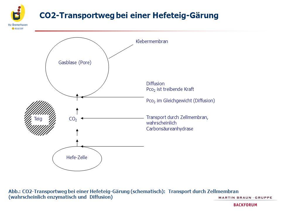 CO2-Transportweg bei einer Hefeteig-Gärung
