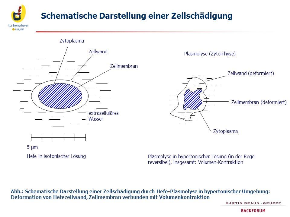 Schematische Darstellung einer Zellschädigung