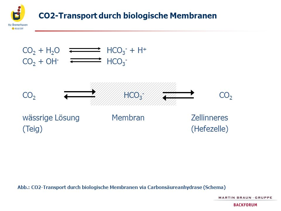 CO2-Transport durch biologische Membranen
