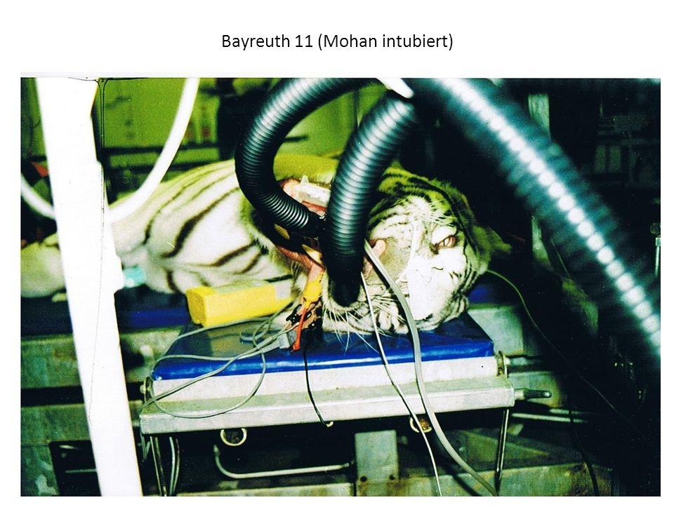 Bayreuth 11 (Mohan intubiert)