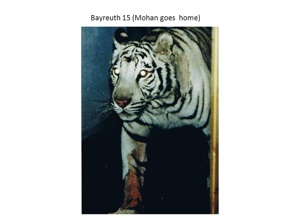Bayreuth 15 (Mohan goes home)