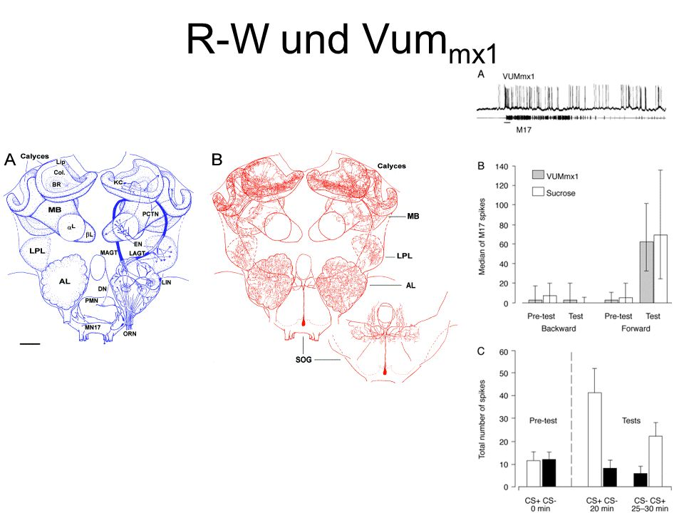 R-W und Vummx1