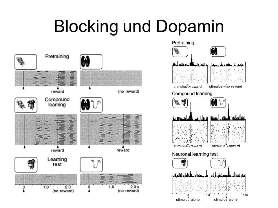 Blocking und Dopamin