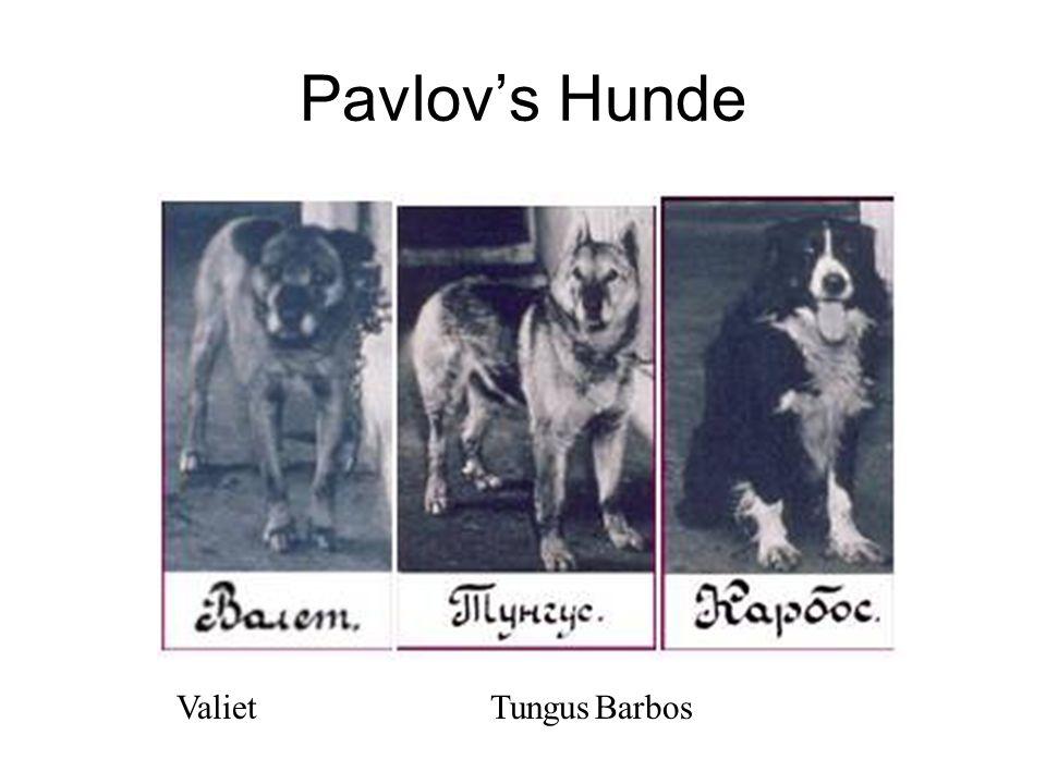 Pavlov's Hunde Valiet Tungus Barbos