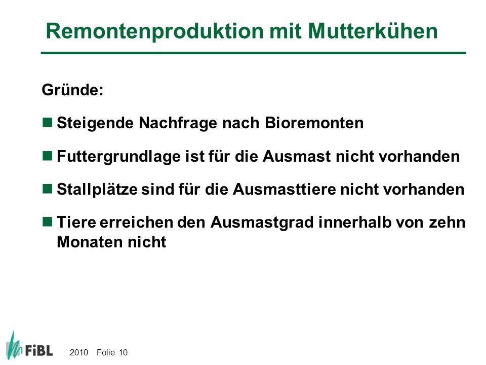Remontenproduktion mit Mutterkühen
