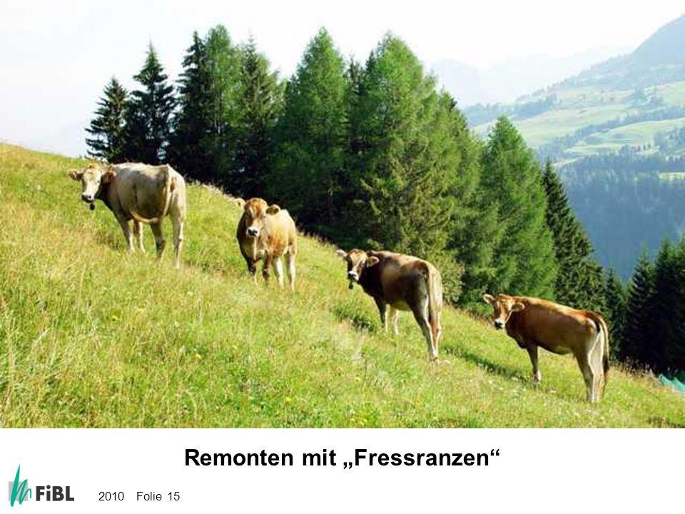 """Bild: Remonten mit """"Fressranzen"""