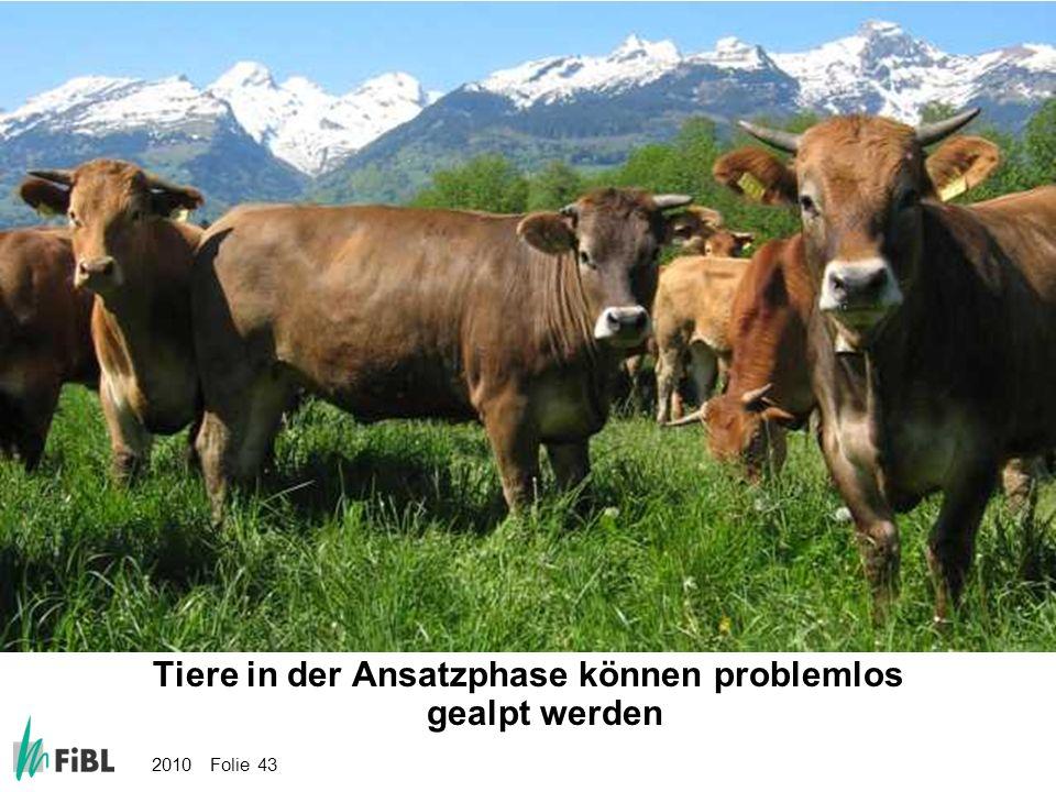 Bild: Tiere in der Ansatzphase können problemlos gealpt werden