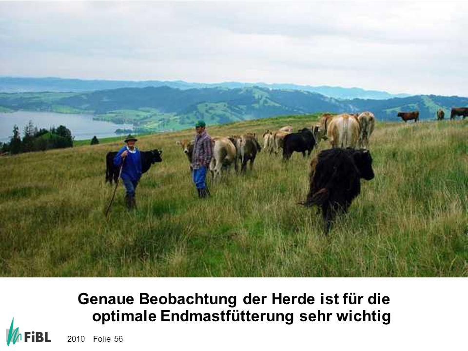 Bild: Genaue Beobachtung der Herde ist für die optimale Endmastfütterung sehr wichtig